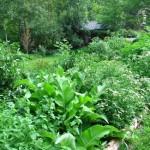 Rimedi naturali dell' orto