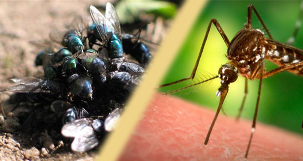 Rimedi naturali contro mosche e zanzare eco risparmio - Rimedi contro le zanzare in giardino ...