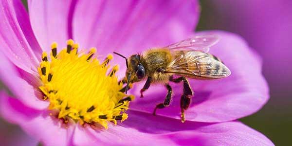 salvaguardare le api